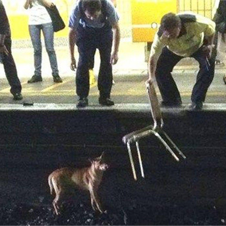 Dog's death on tracks prompts MTR to adopt animal rescue