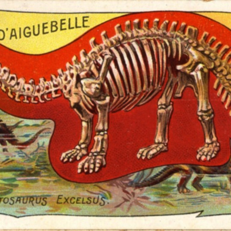 3b44e78b2 A vintage 1905 trading card by the Chocolat D'Aiguebelle company shows a  Bronotosaurus skeleton