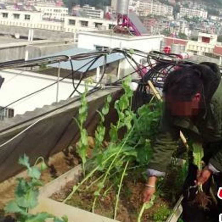 Chinese man growing poppies on his roof to make drugs caught