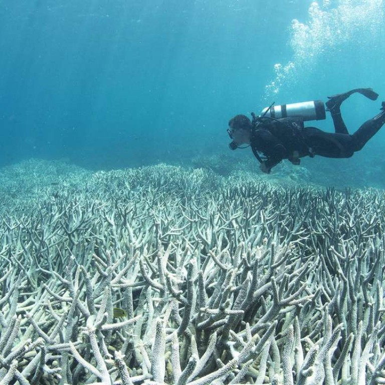 Large Parts Of Great Barrier Reef Could Be Dead In 20 Years