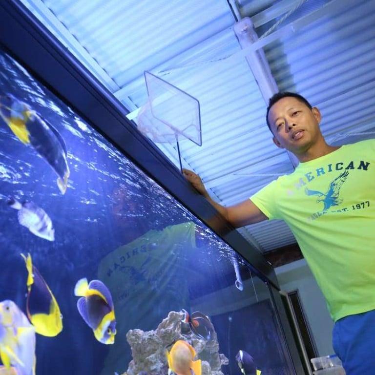 5 of the most expensive marine aquarium fish money can buy ...