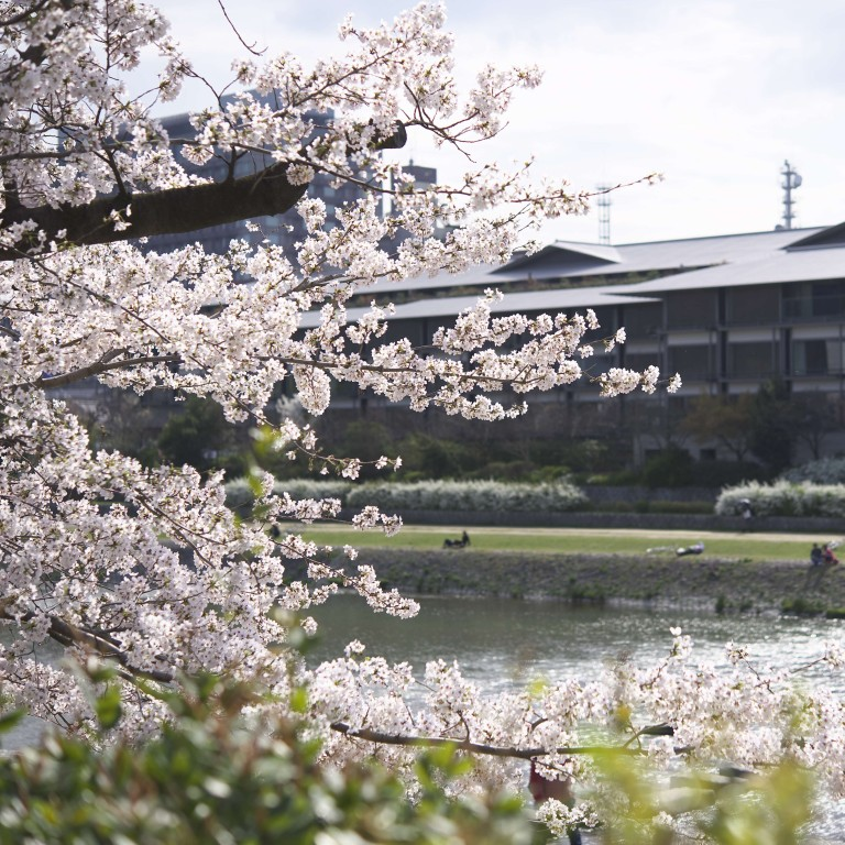 Cherry Blossom Time In Kyoto Where To Go And What To Eat South China Morning Post