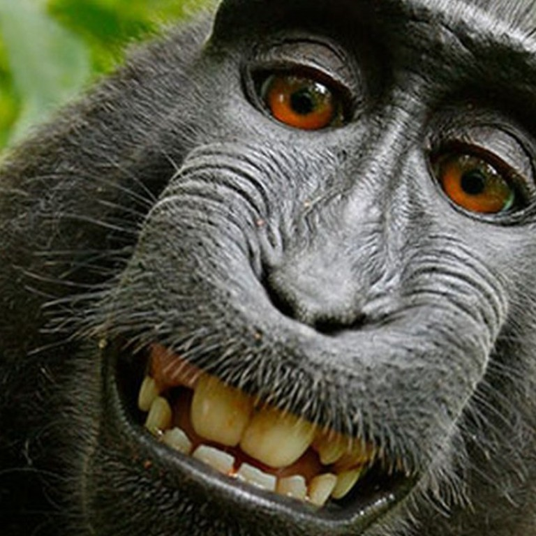 Lawyers for monkey who took famous selfie agree to settle
