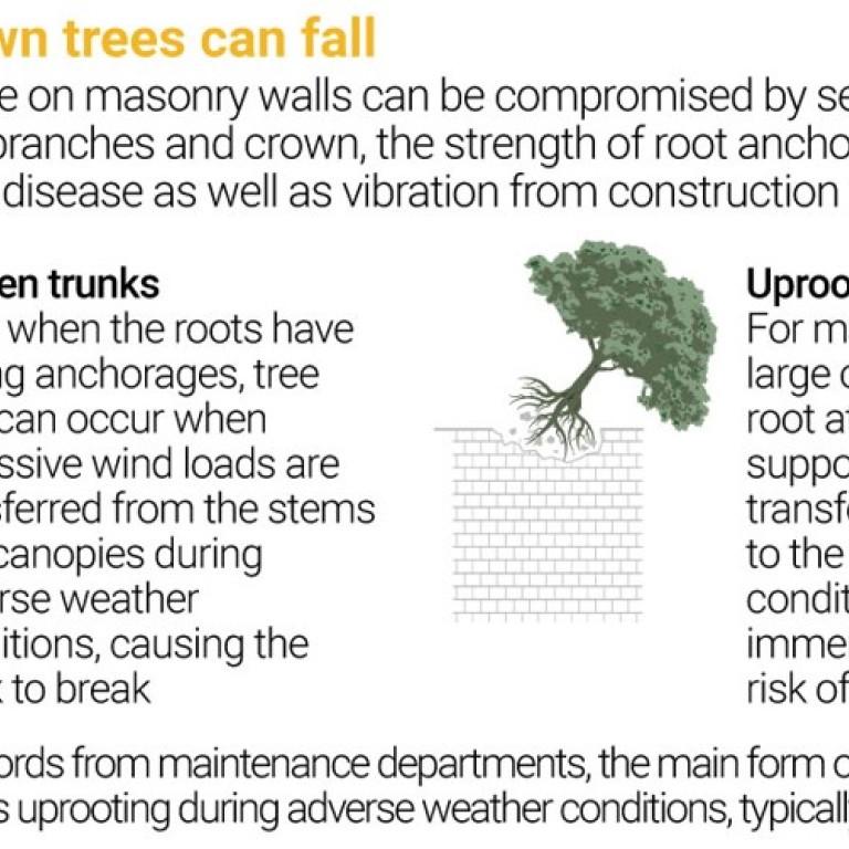 5599b76f9629e Could Hong Kong's 80-year-old banyan trees on Bonham Road have been spared  the axe? | South China Morning Post