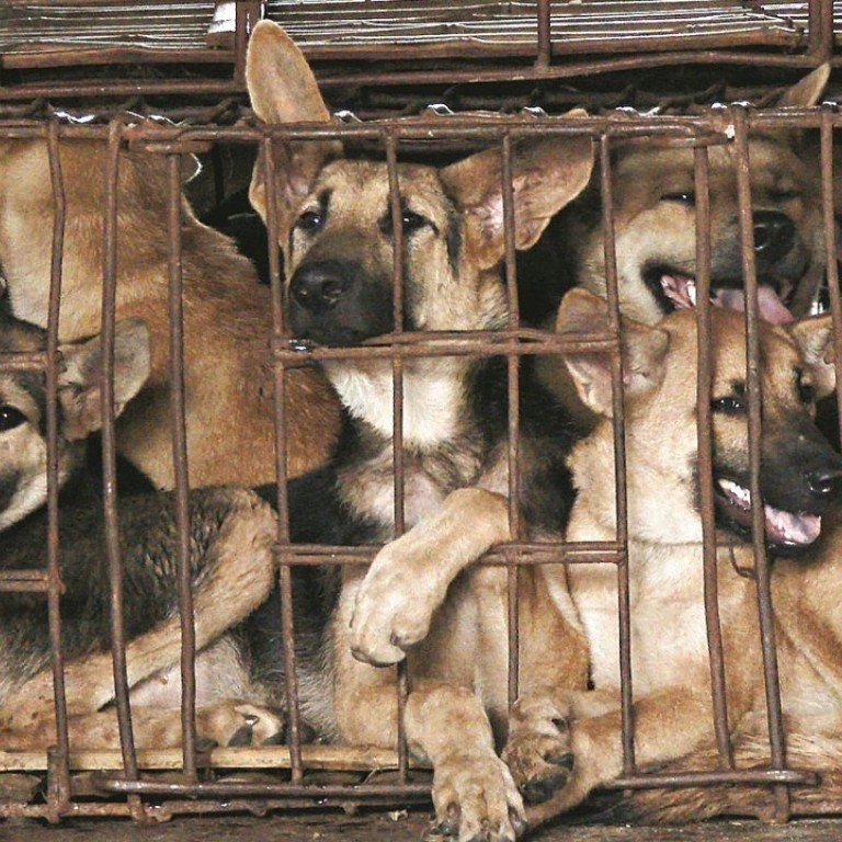 Asia S Booming Dog Meat Business And