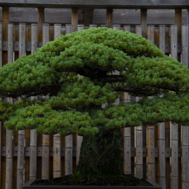 Thieves stole a rare 400-year-old bonsai from a Japanese garden  The
