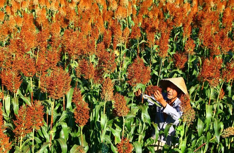China just announced huge tariffs on $1 billion of US sorghum