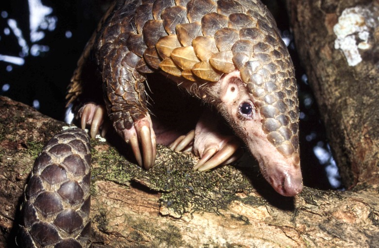 Tap here to buy the world's most trafficked mammal
