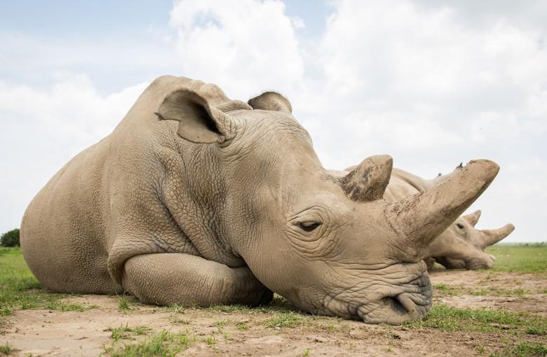 China U-turns on tiger and rhino parts