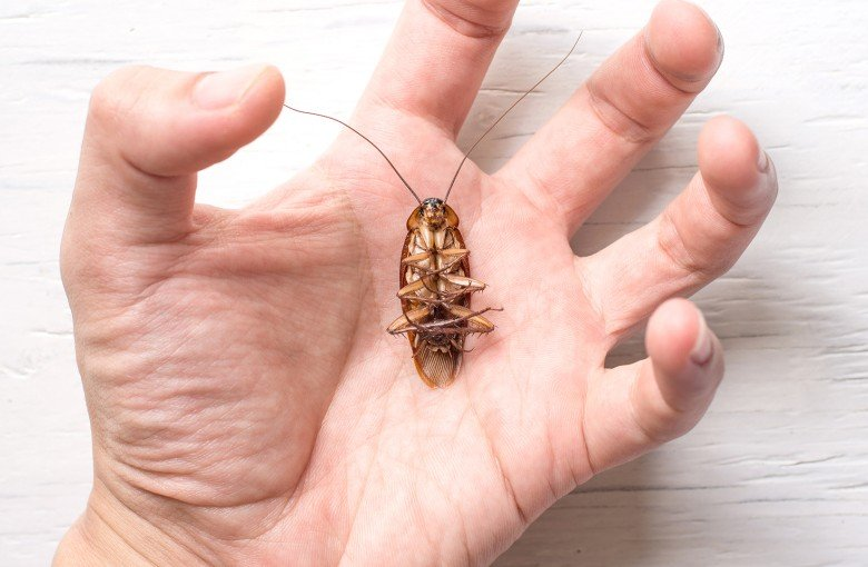 Cockroaches in China are pests – and protein
