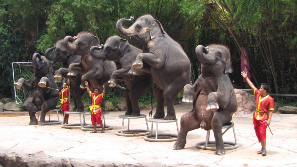 Dumbo Unchained How Ethical Elephant Tourism In Thailand