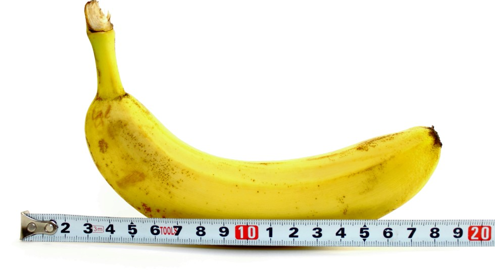 Image result for penis size