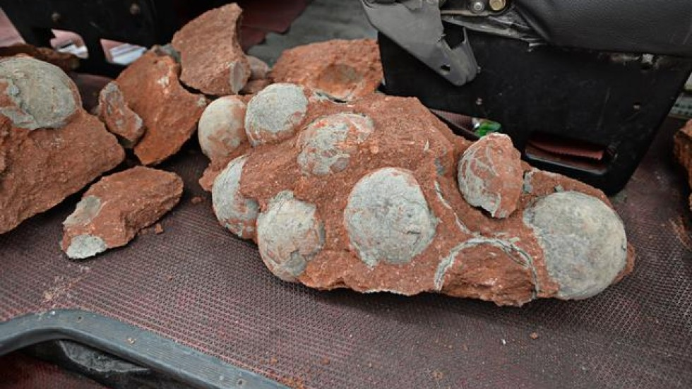 On Vacation As Genuine Dinosaur Eggs Most Of These Types Posts Come A Single One Time Item For Sale But Others Are Listed Over And Again