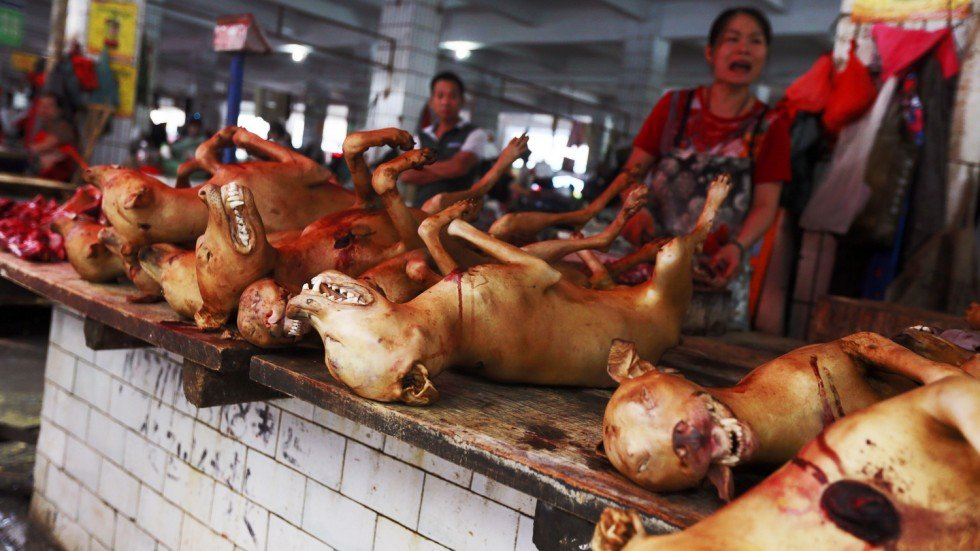 Image result for dog meat in china