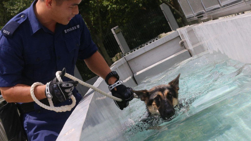 Training Of Hong Kong Police Dog Handlers Questioned