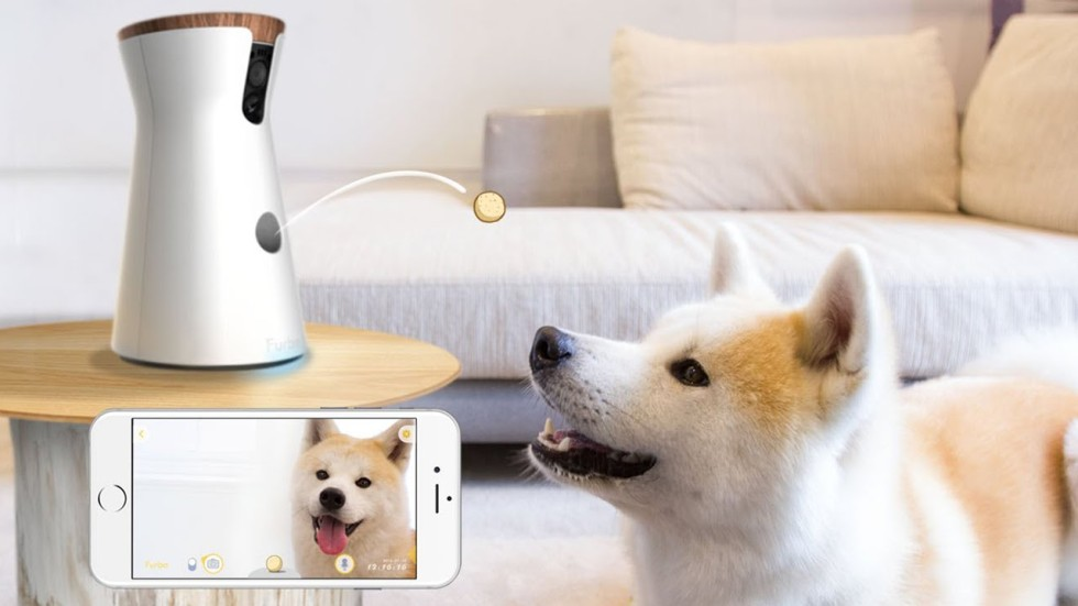 smart home kits keep owners connected to pampered pets south china morning post. Black Bedroom Furniture Sets. Home Design Ideas