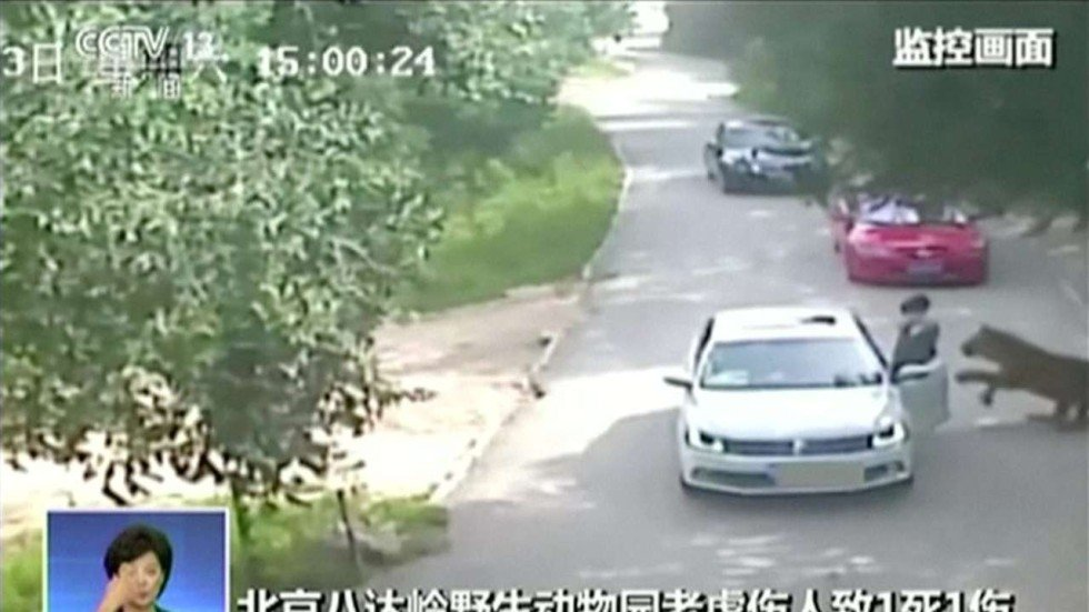 Woman In Serious Condition After Tiger Attack Kills Mother In