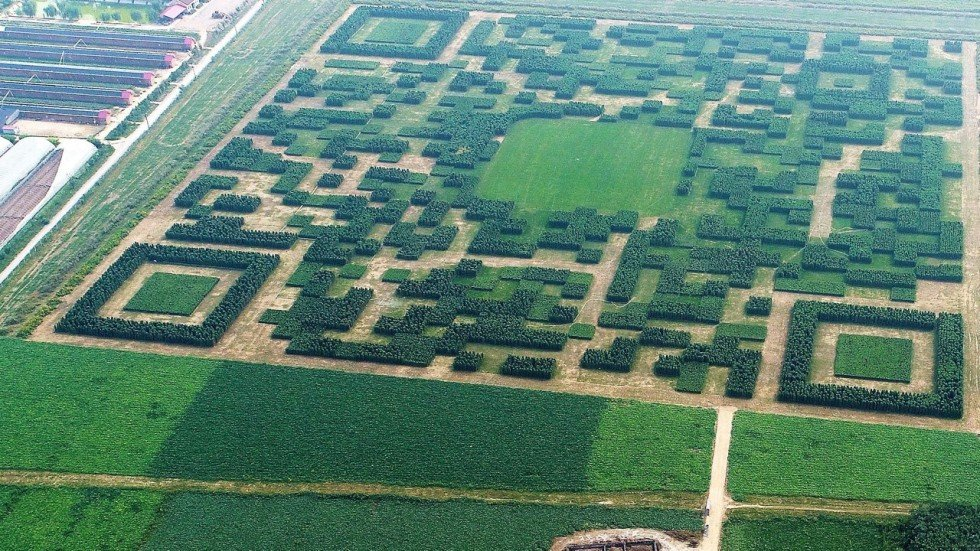 Chinese Village Builds Giant Qr Code In Field In Effort To