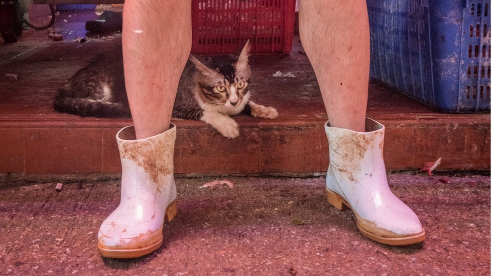 Photo Book Hong Kong Market Cats Sequel To Shop Cats Shows Wilder