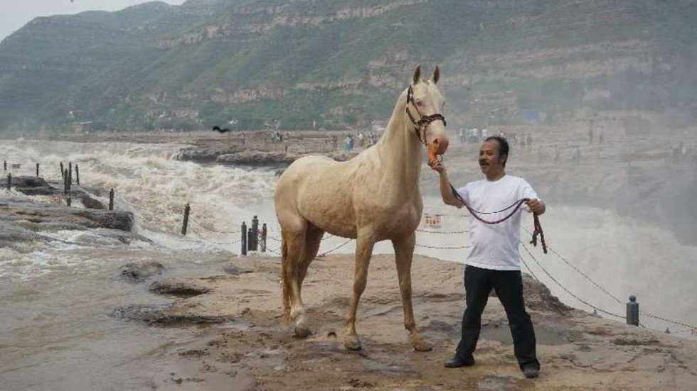 What An Ancient Horse Breed Tells Us About The Chinese Dream