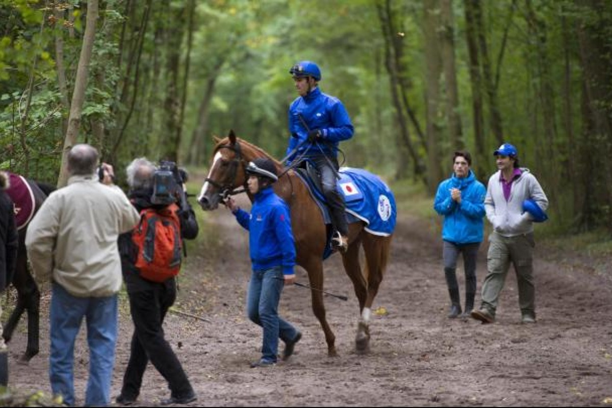 Orfevre and Christophe Soumillon walk back to the stables after a final gallop in Lamorlaye, north of Paris. Photo: AFP