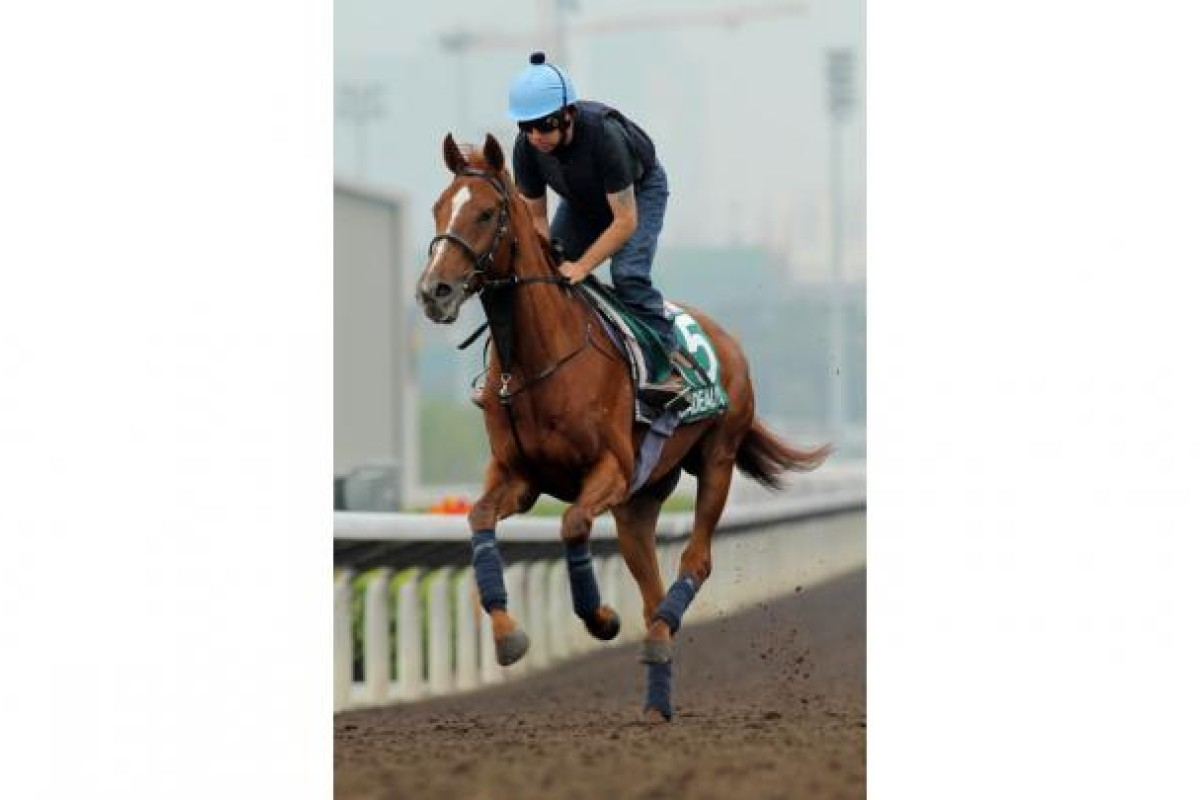 The 2011 Hong Kong Vase runner Red Cadeaux. Photo: Kenneth Chan