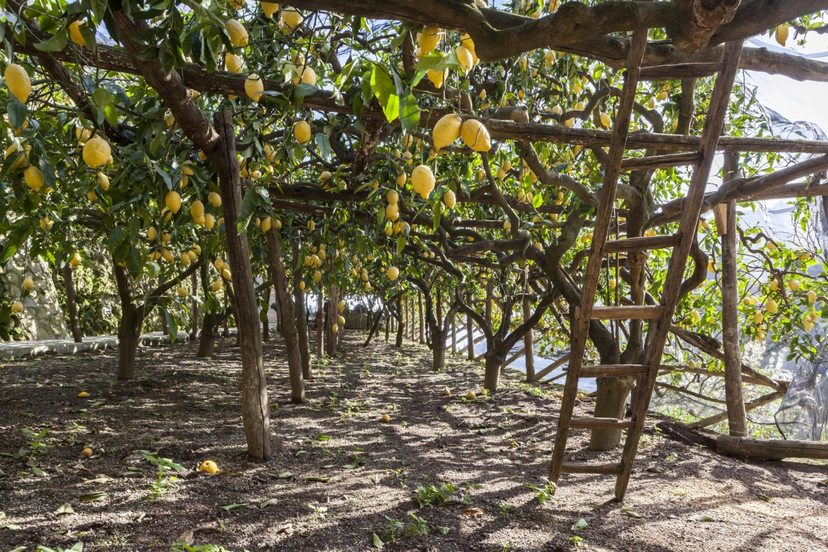 Lemon groves at Villa Maria, Minori.