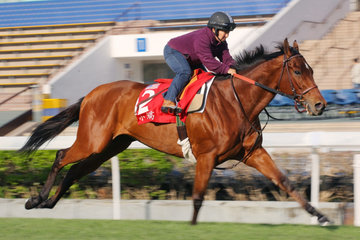 Little Mike puts in some solid work at Sha Tin ahead of the big race on Sunday. Photo: Kenneth Chan
