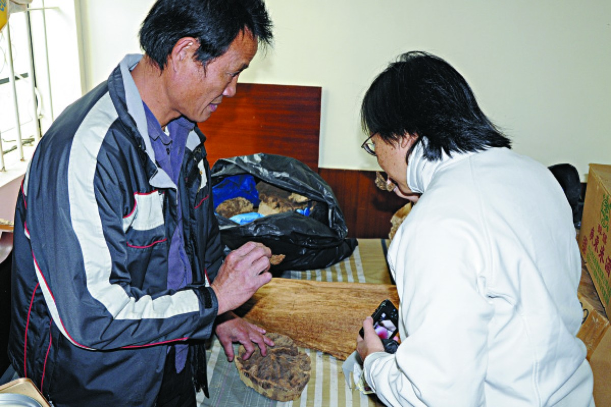 Chan Koon-wing shows his agarwood collection to conservationist Ho Pui-han.