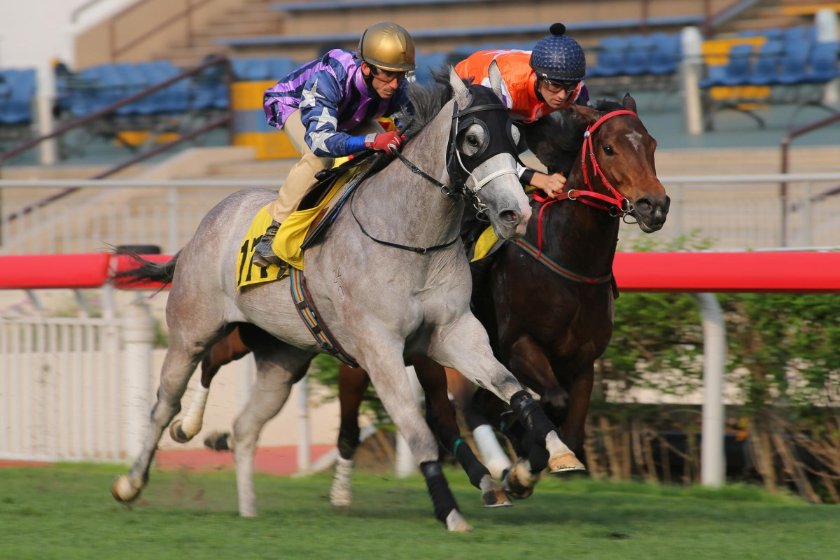 The grey Incredible Fellow (Olivier Doleuze) holds off Harbour Punk (Tye Angland) on Tuesday. Harbour Punk was under a hold and looks one to follow. Photos: Kenneth Chan