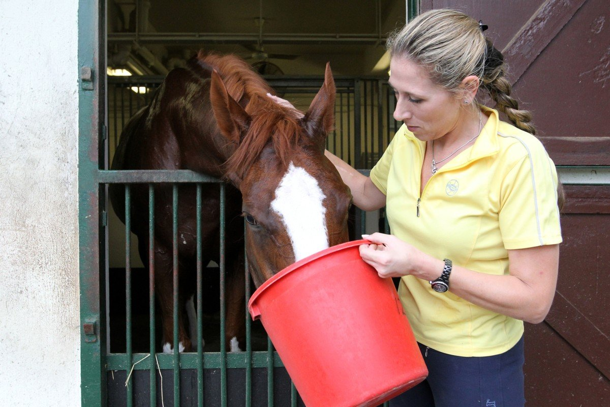 Gillian Carlisle, operations manager of the Hong Kong Jockey Club, feeds former racehorse Phaedo at Beas River Country Club. Photo: Dickson Lee