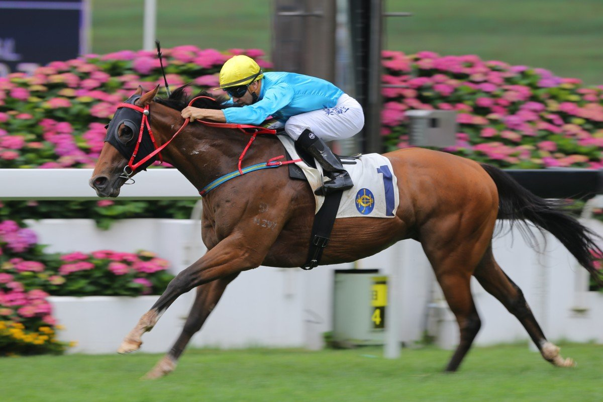 Tour De Force started the ball rolling in the Triple Trio on Champions Mile race day, winning race five at Sha Tin. Photo: Kenneth Chan