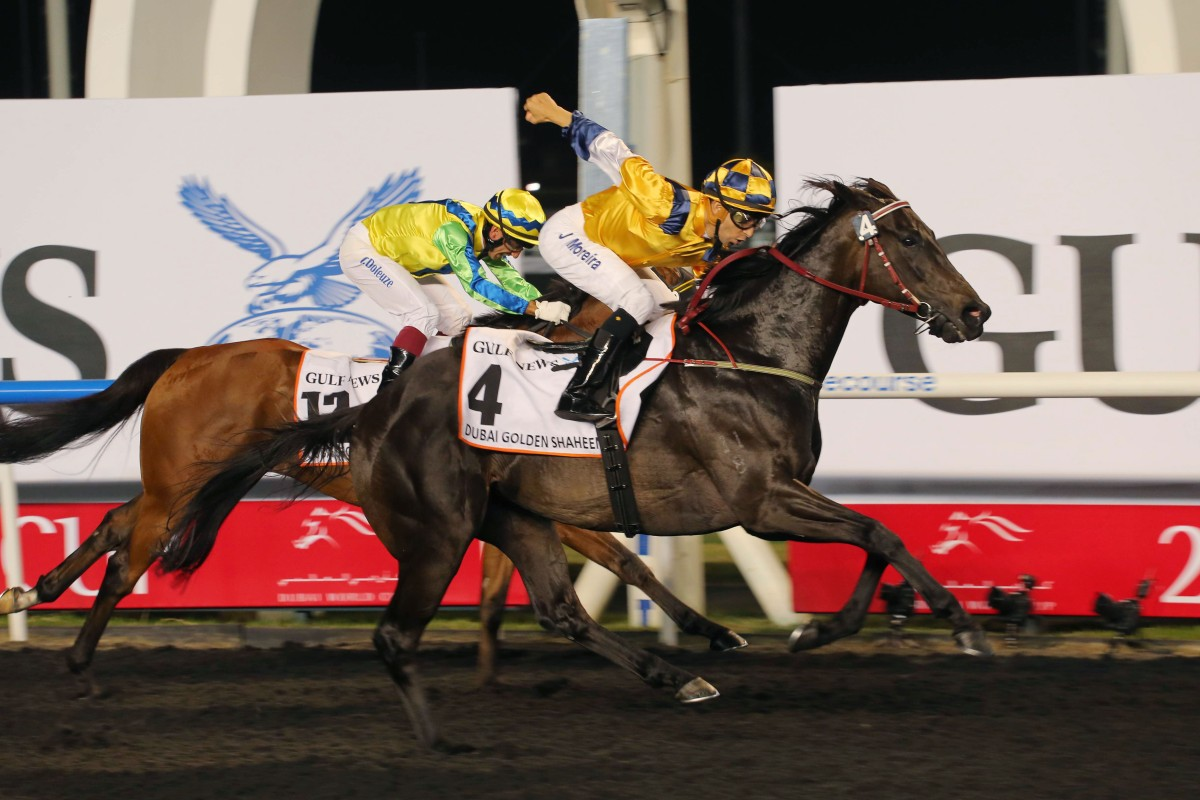 Sterling City wins the Golden Shaheen in Dubai, beating compatriot and American Grade One winner Rich Tapestry. Photo: Kenneth Chan