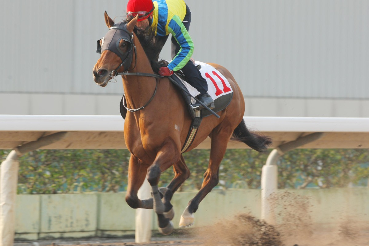 Rich Tapestry would be better off having a prep race in Dubai. Photos: Kenneth Chan