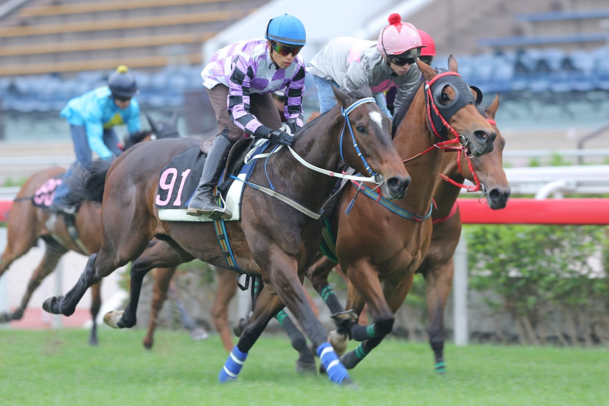 Peace Combination, ridden by Vincent Ho Chak-yiu, won a barrier trial over 800m on the turf at Sha Tin in December. Photos: Kenneth Chan