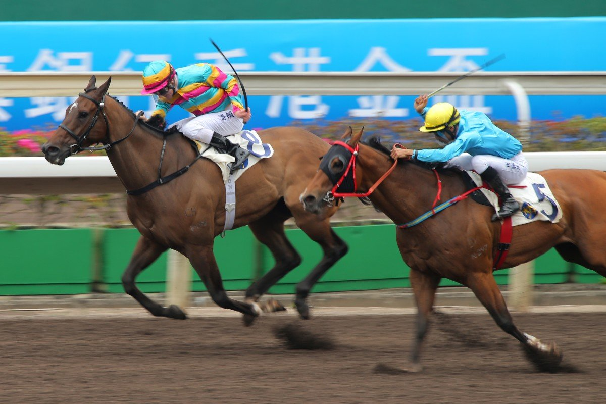 Super Jockey, with Zac Purton aboard winning a Class One over 1,200m at Sha Tin earlier this month, will fly the bauhinia flag in racing overseas, but it would not have been eligible for importation to Hong Kong if a 70 rating had been required. Photos: Kenneth Chan