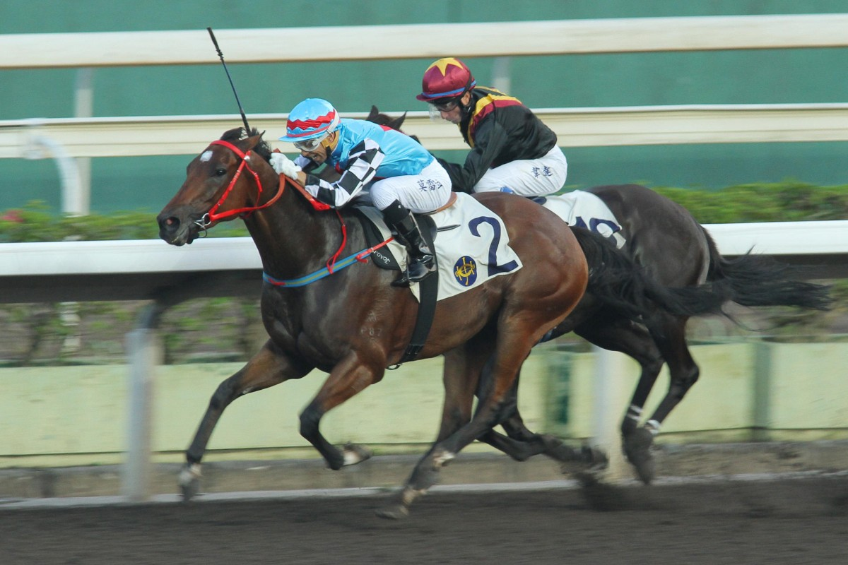 Access Years has become a dirt specialist, winning three times and placing twice on the all-weather track. He returns to the surface today after two strong turf runs. Photo: Kenneth Chan