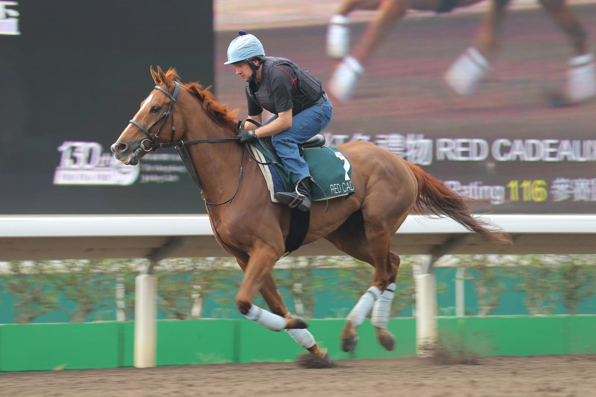 Hong Kong-owned Red Cadeaux is a three-time Melbourne Cup runner-up. Photos: Kenneth Chan
