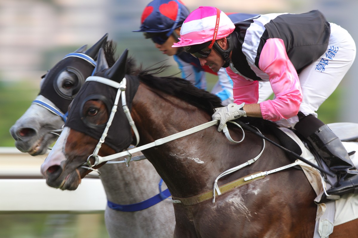 Beauty Only will run in the Jockey Club Cup on Saturday week as trainer Tony Cruz looks to separate him from his owner mate Beauty Flame. Photo: Kenneth Chan