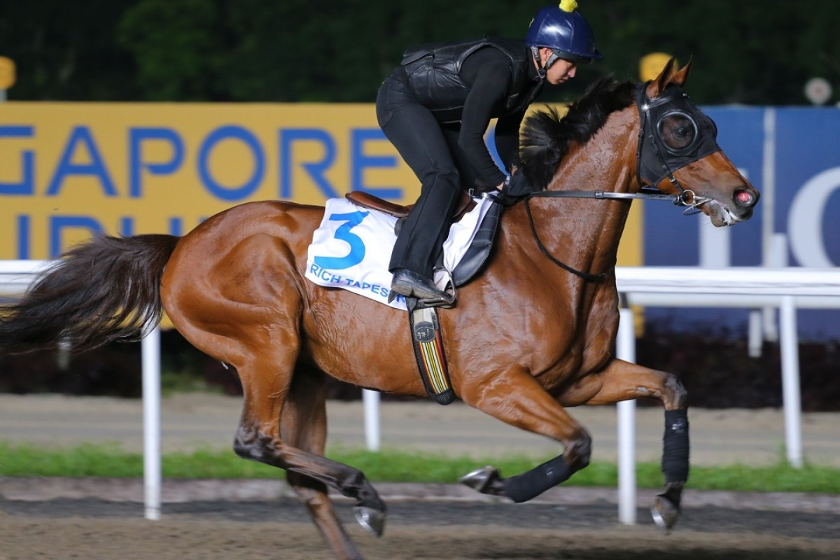 Hong Kong dirt hero Rich Tapestry, a winner in the US, could end his career in South Korea. Photo Kenneth Chan