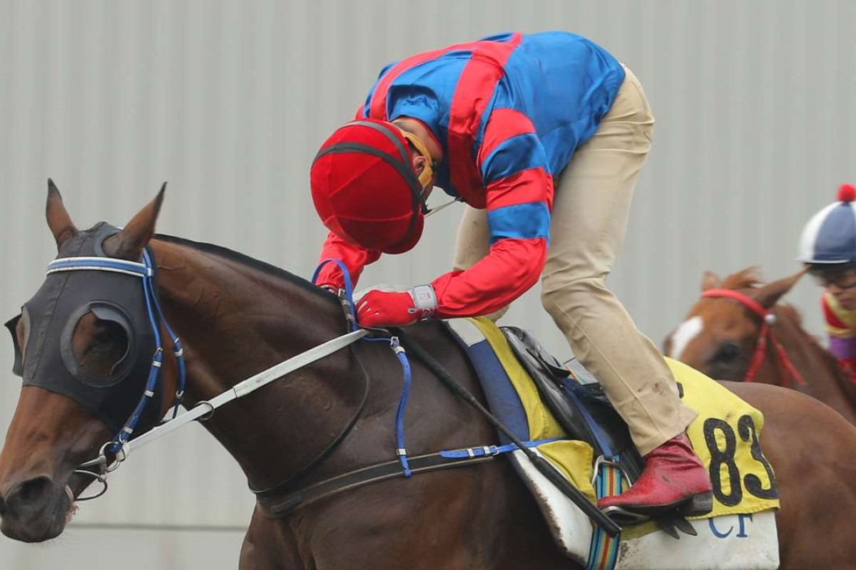 Gun Pit trials under Olivier Doleuze at Sha Tin on Wednesday. Plans to run in the Korea Sprint in Seoul on September 11 have been shelved. Photo: Kenneth Chan