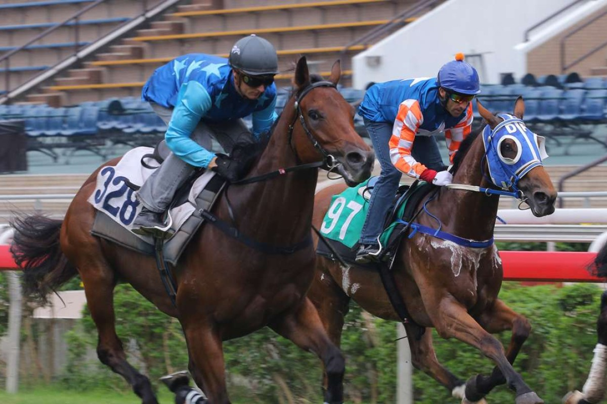 Pricy purchase Jing Jing Win (left), ridden by Zac Purton in a recent trial, makes his much-anticipated debut on Sunday. Photos: Kenneth Chan