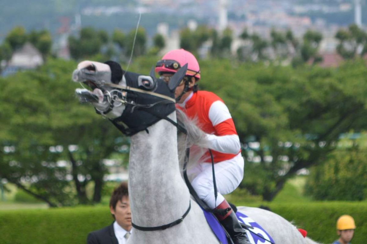 """Gold Ship, seen here with spittle flaying into the air, goes a little bit """"cray cray"""" before the 2015 Takarazuka Kinen, in which he bombed the start by 20 lengths. Photo: Andrew Hawkins."""
