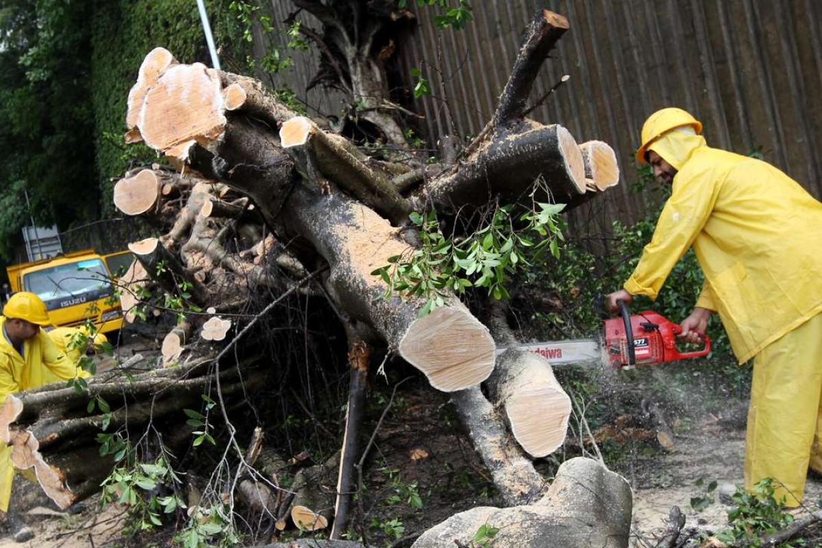 Government competence in action. Workers remove a tree felled by Typhoon Vicente, in July 2012. Picture: SCMP