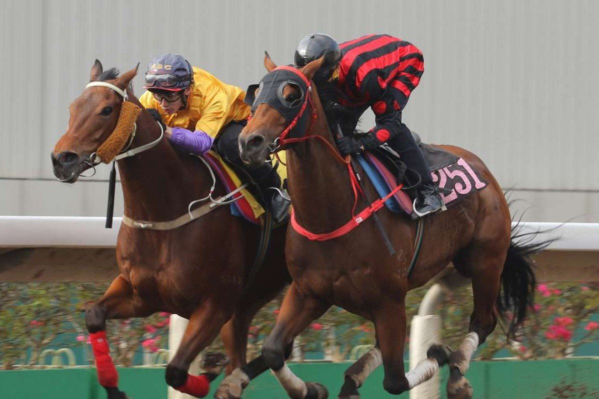 Thewizardofoz cruises up to Peniaphobia in a trial on Tuesday at Sha Tin. Photos: Kenneth Chan.