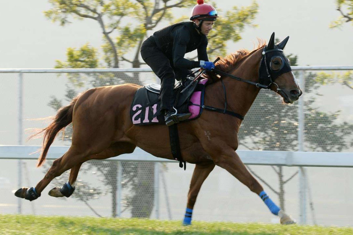 Brett Prebble works out Lucky Bubbles at Sha Tin in readiness for his defence of the Group Two Sprint Cup. Photos: Kenneth Chan