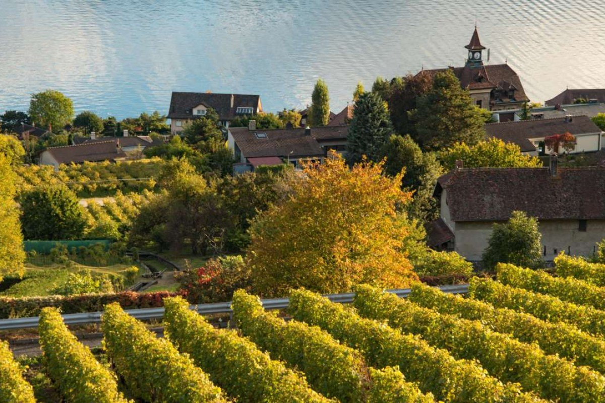 The vineyards of Lavaux, in Switzerland, where the main grape variety is chasselas. Picture: Alamy