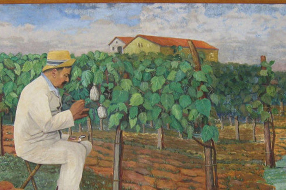 A painting of Francois Baco, who came up with the baco noir hybrid grape in 1898.