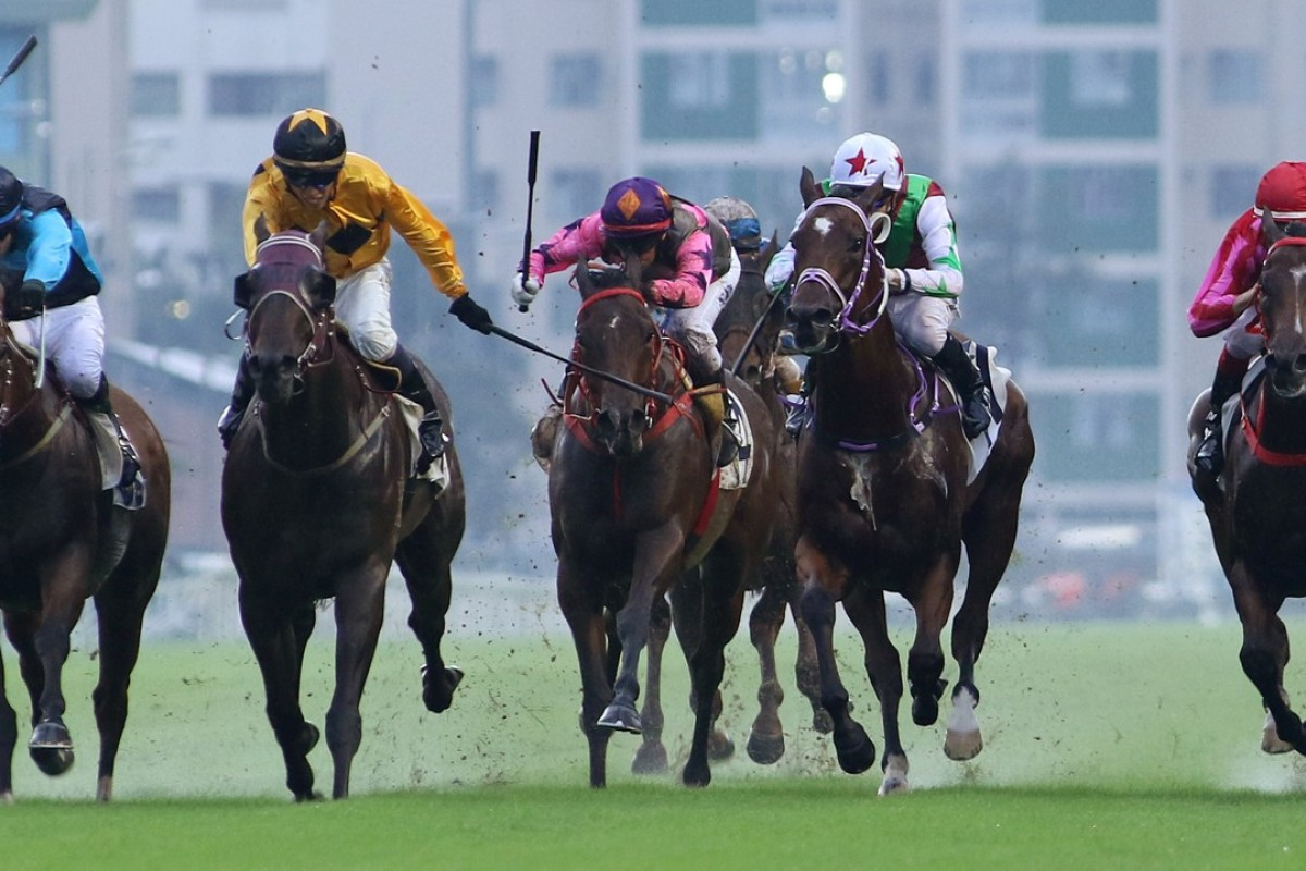 Dashing Fellow (yellow silks) takes out the Group Three National Day Cup at Sha Tin on Sunday. Photos: Kenneth Chan