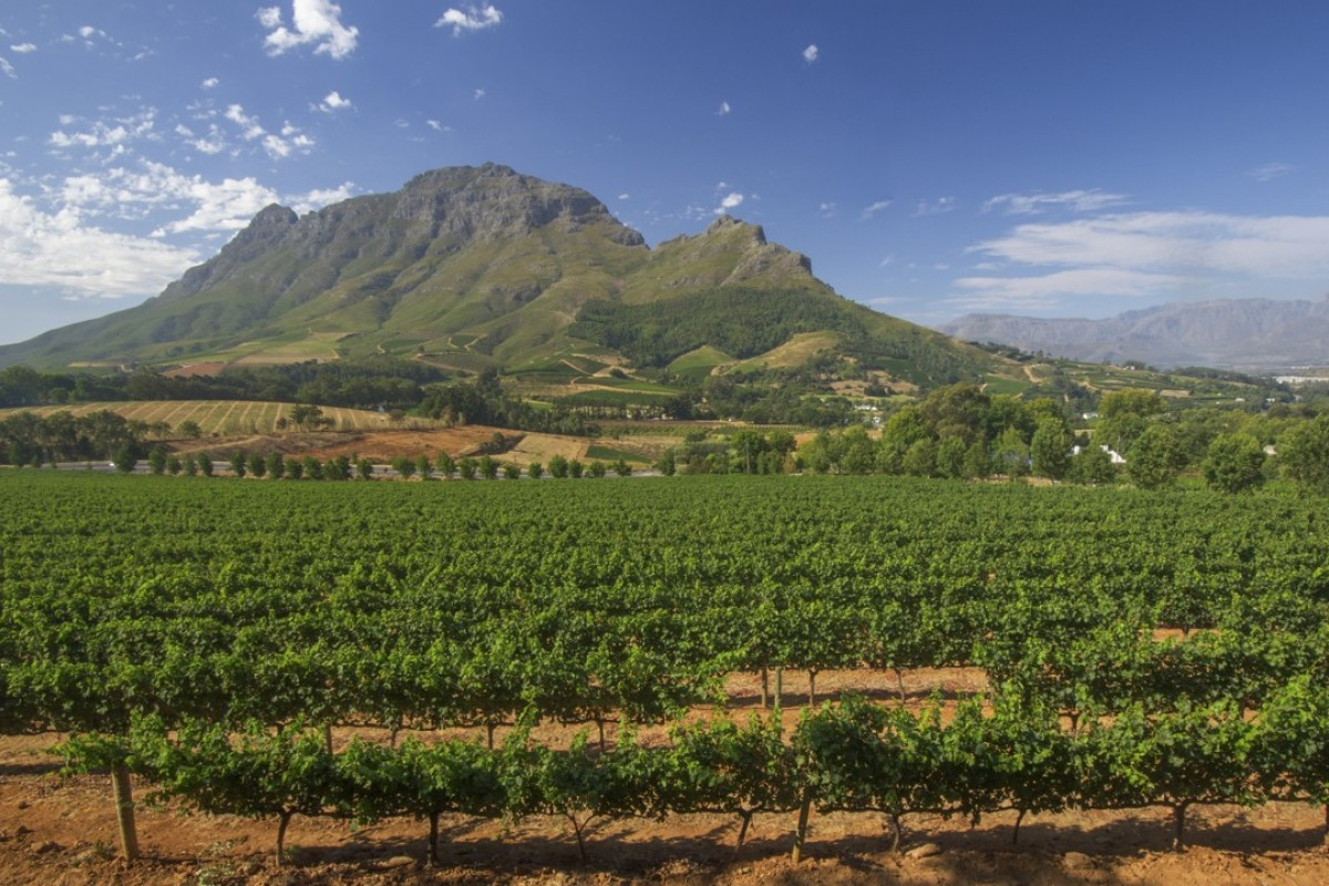 The Simonsberg mountains loom over the vineyards of Stellenbosch, in Western Cape province, South Africa.